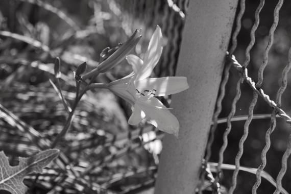 blanco y negro fotografia