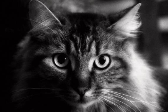 consejos fotografia en blanco y negro