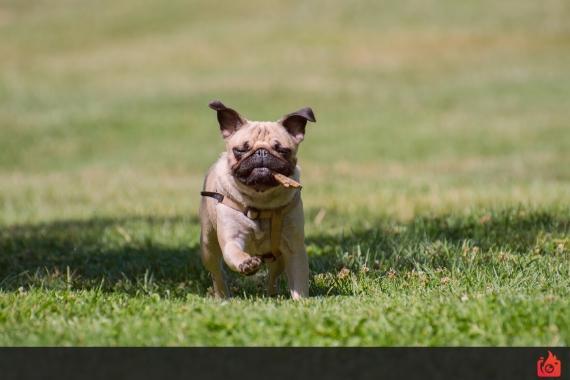 ejemplo imagen perro congelado con una velocidad de obturacion corta