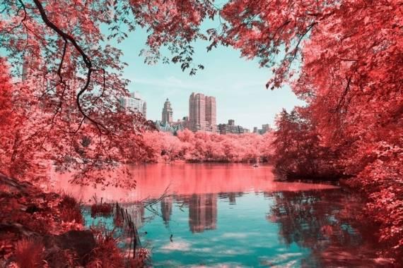 foto con filtro infrarrojo