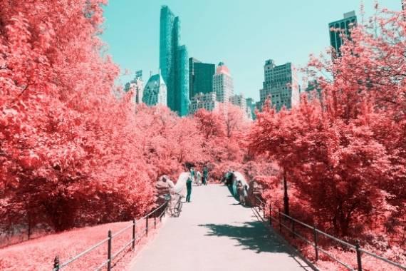 fotografia con filtro infrarrojo