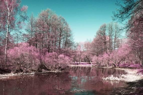 fotografia infraroja