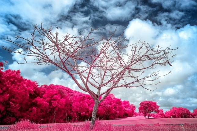 fotografia infrarroja 2