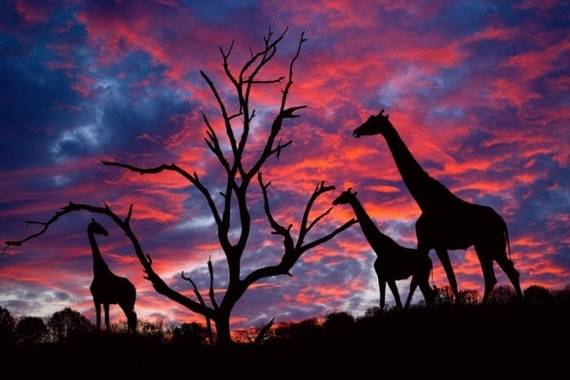 fotos bonitas naturaleza
