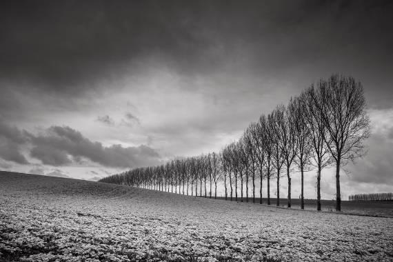 fotos en blanc i negre