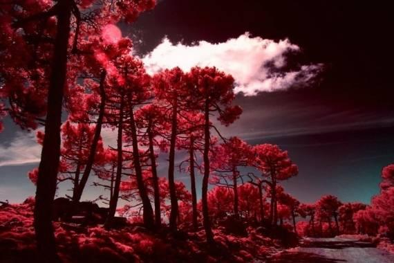 guia fotografias infrarrojas