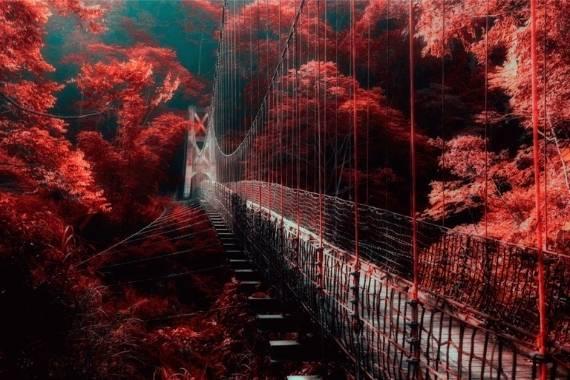 guia fotos infrarrojas
