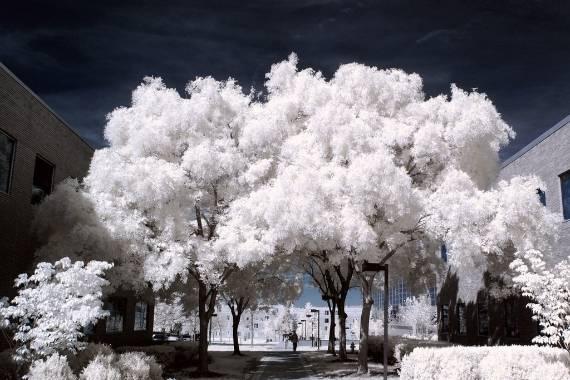 hacer fotos con filtro infrarrojo