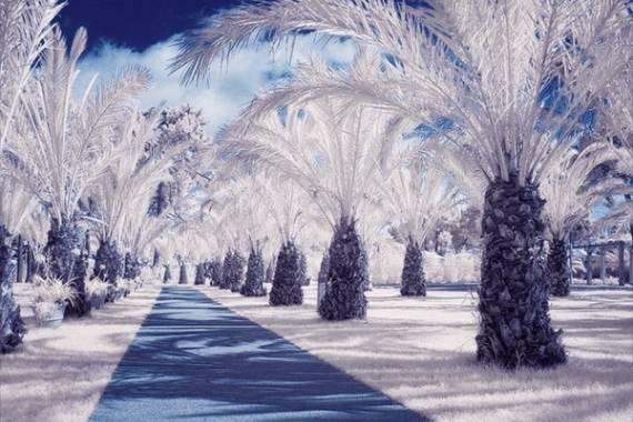 tutorial fotografia con filtro infrarrojo